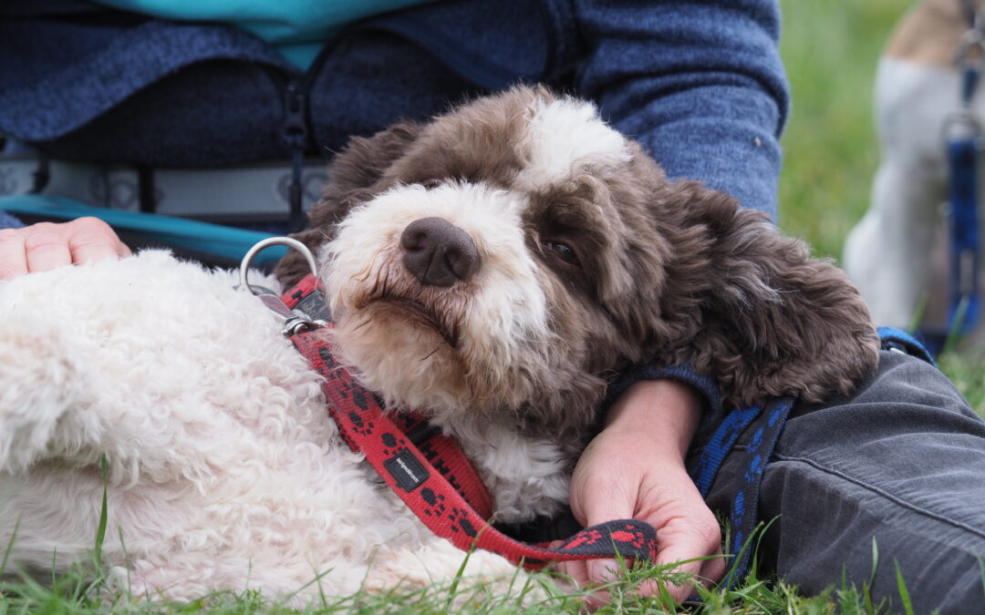 Medical Training – Die Königsdisziplin im Tiertraining
