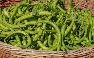 Warum sind grüne Bohnen ungesund?