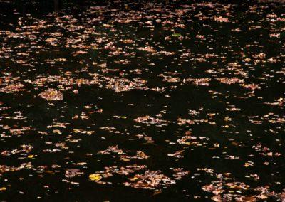 Herbstlaub-im-See