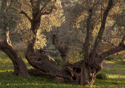 Olivenskulptur-2