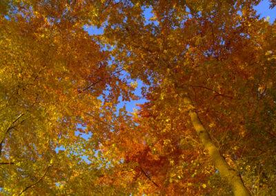 Herbstbaum1