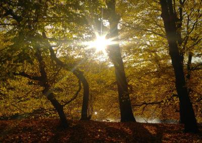 Lichtblick-im-Herbst1