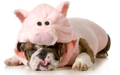 Wollen Sie Ihren inneren Schweinehund überwinden?