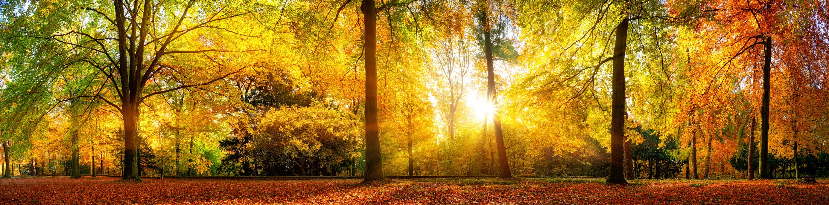 Ruhe und Gelassenheit dank Meditation