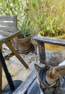 Housesitting Terrasse Katze