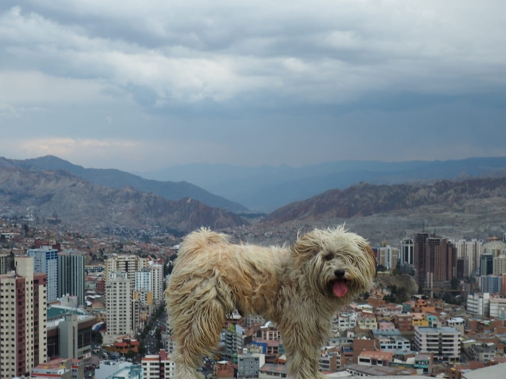 fluffy stray dog