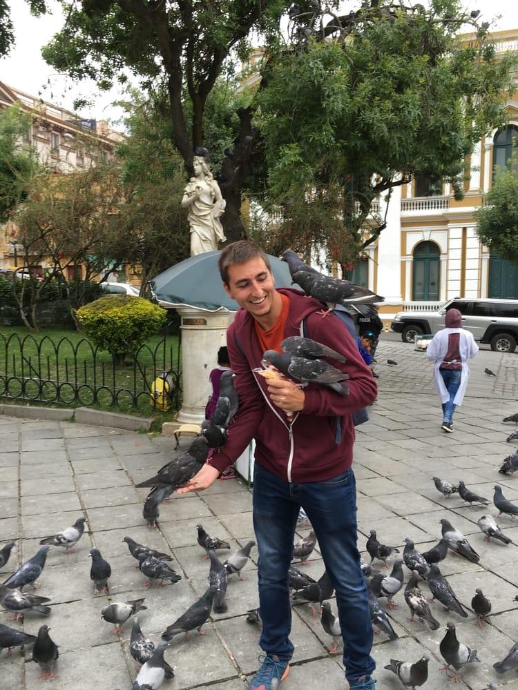 local pigeon