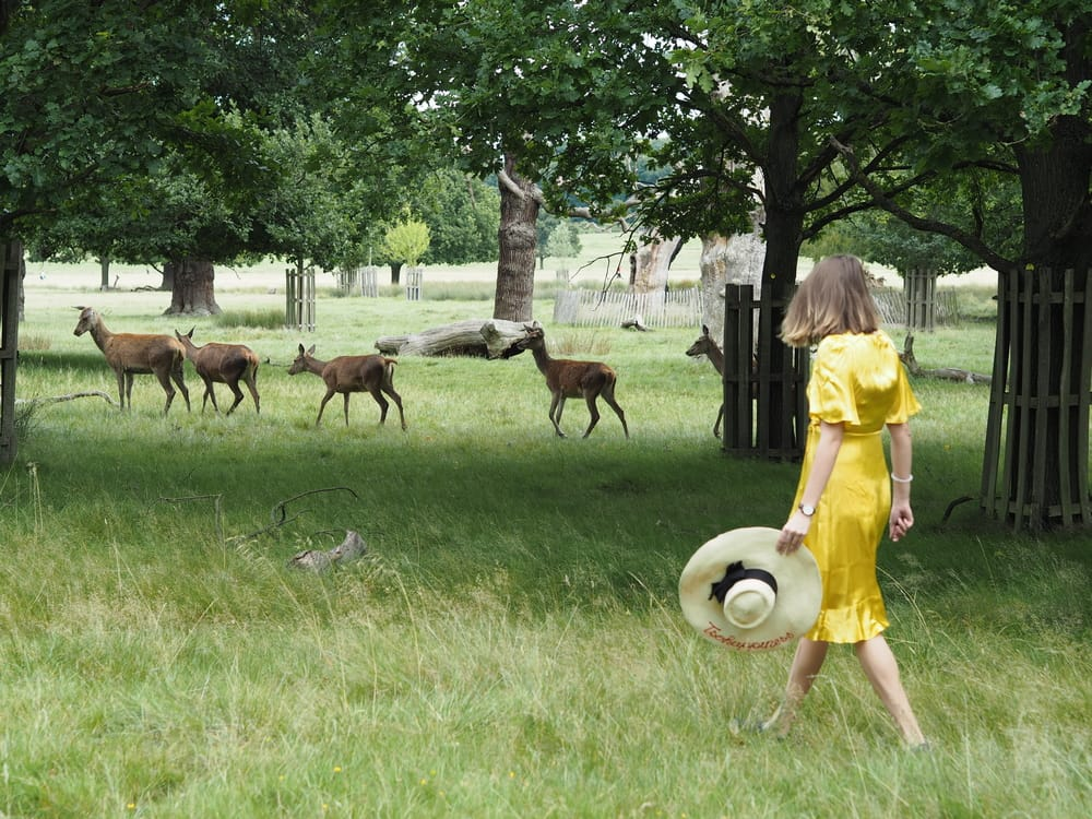 walk with deers