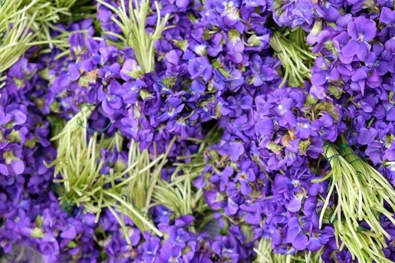 violettes11