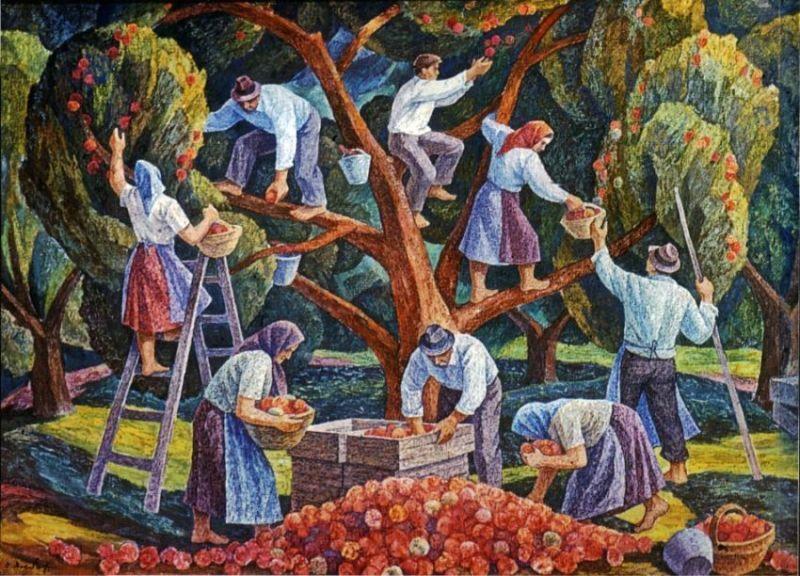 збір яблук