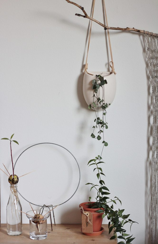 kasveja seinällä