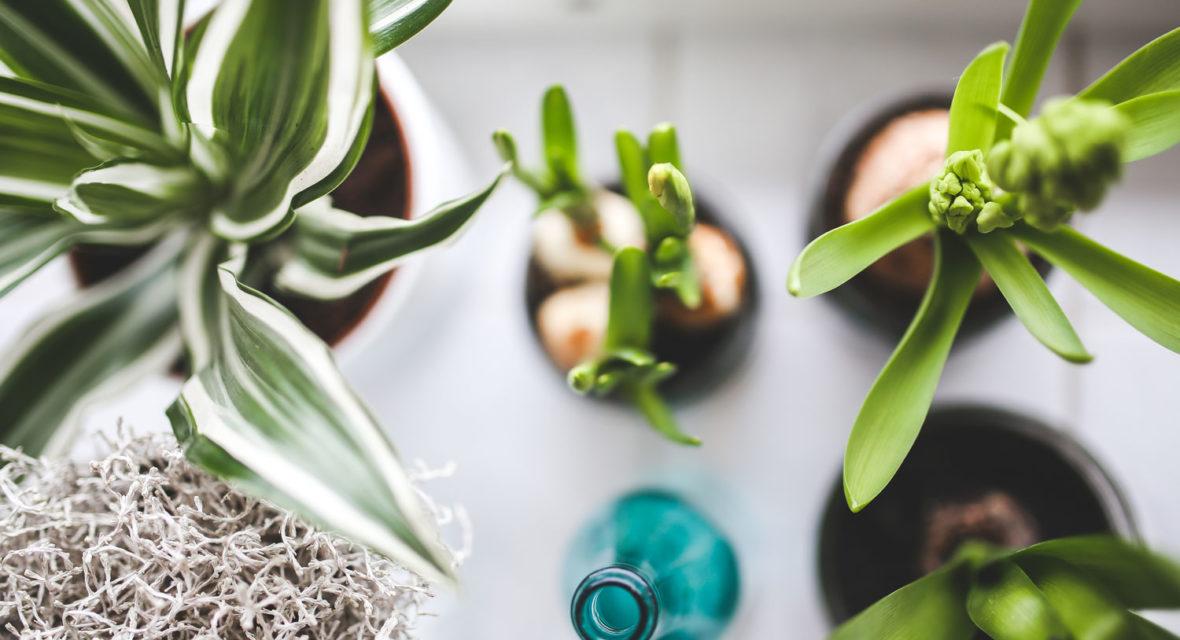 Blumen Gießen Urlaub mit diesen diy tricks überstehen deine blumen den urlaub