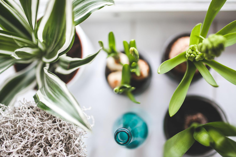 Blumen Giessen Urlaub Pflanzen Bewassern Tricks Miss Made It
