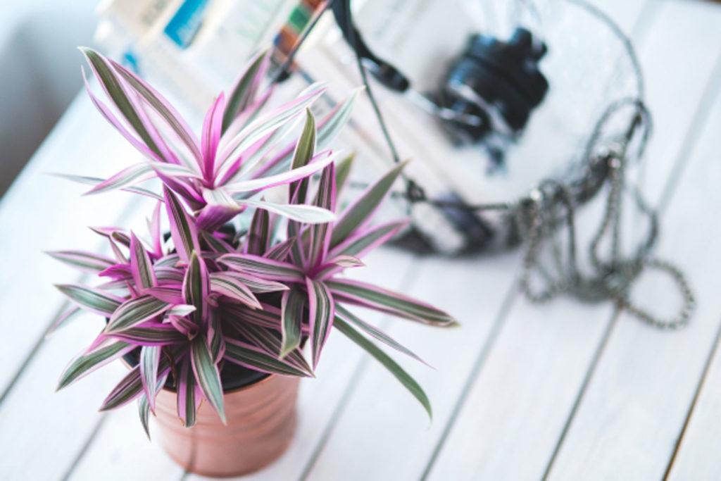 Blumentopf bemalen mit Kupferfarbe
