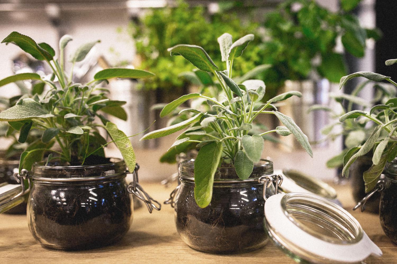 einmachglas-blumentopf-pflanzen-selber-machen - miss made it