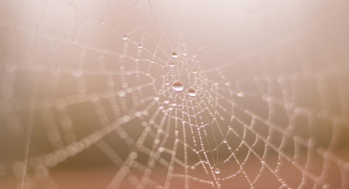 Spinnen basteln mit Kindern für Halloween
