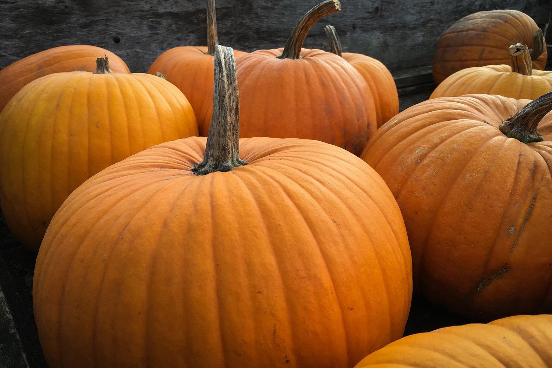 Viele Kürbisse für Halloween