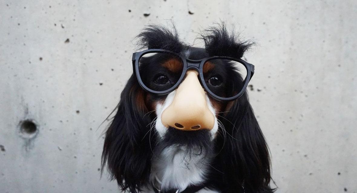Die Top 5 Hunde Kostume Fur Halloween