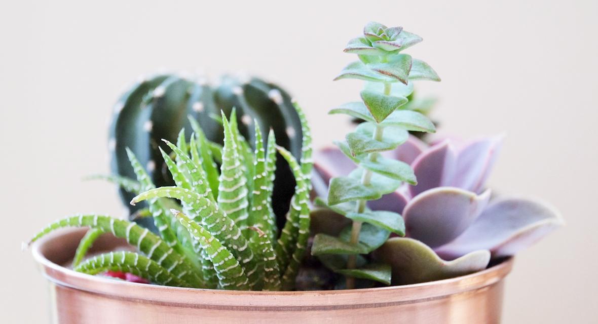 DIY Blumentopf in Roségold mit Sukkulenten