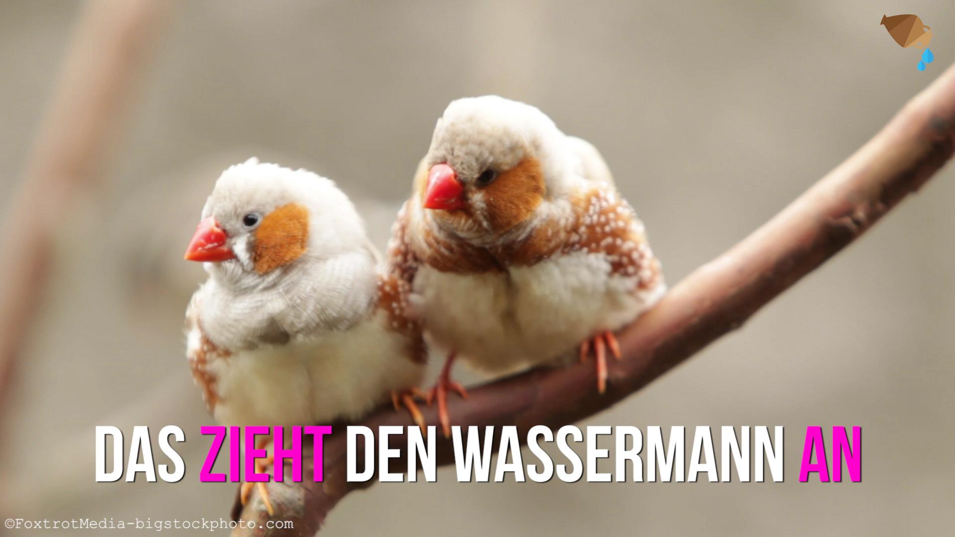 Was Passt Am Besten Zum Wassermann : partnerhoroskop welches sternzeichen passt zum wassermann ~ Frokenaadalensverden.com Haus und Dekorationen