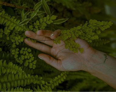 Eine Hand berührt einen Busch.