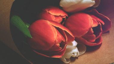 Tulpen sind in einem Papier eingewickelt