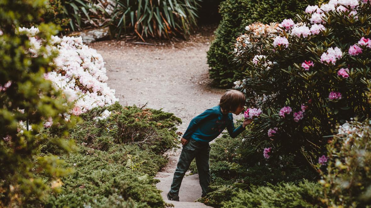 Kind riecht in einem Garten an einer Blume