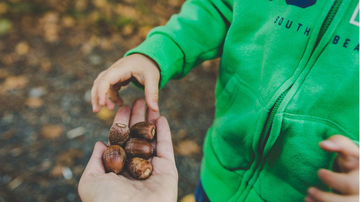 Kind sammelt Eicheln