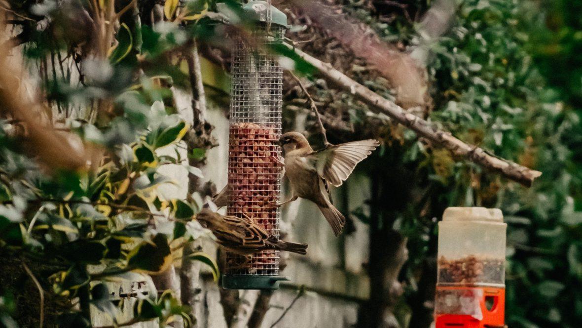 Jeder sollte Vögel füttern, um ihre Bestände zu schützen. Wie du Vogelfutter selber machen kannst? Ganz einfach!