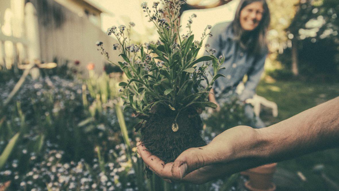 Zwerge, Elfen und Kobolde können uns bei der Gartenarbeit helfen.