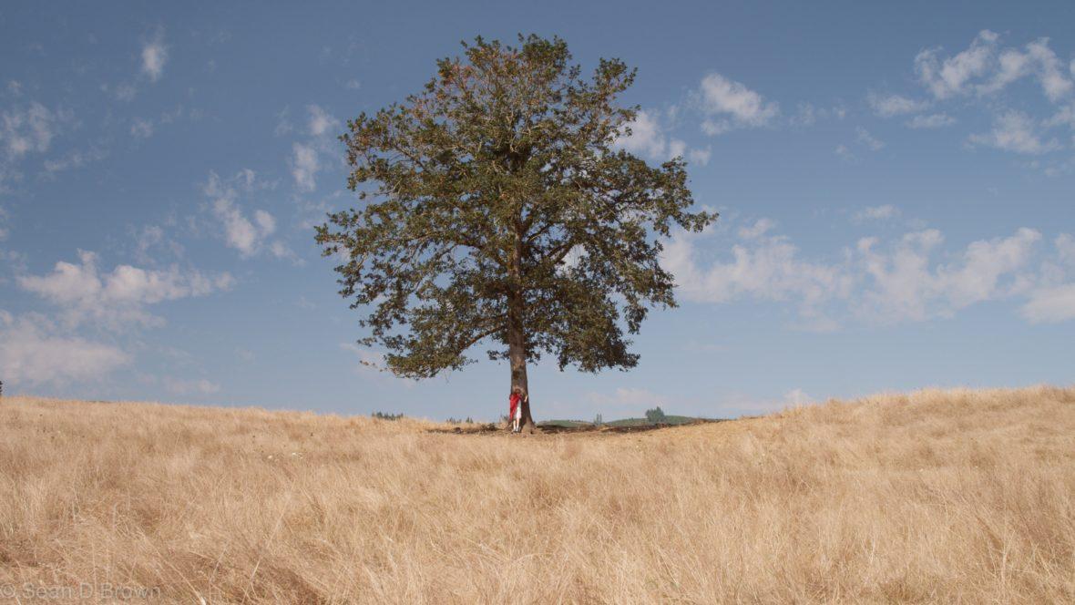 Der Baum Des Lebens Kraftspender Und Religiöses Zeichen