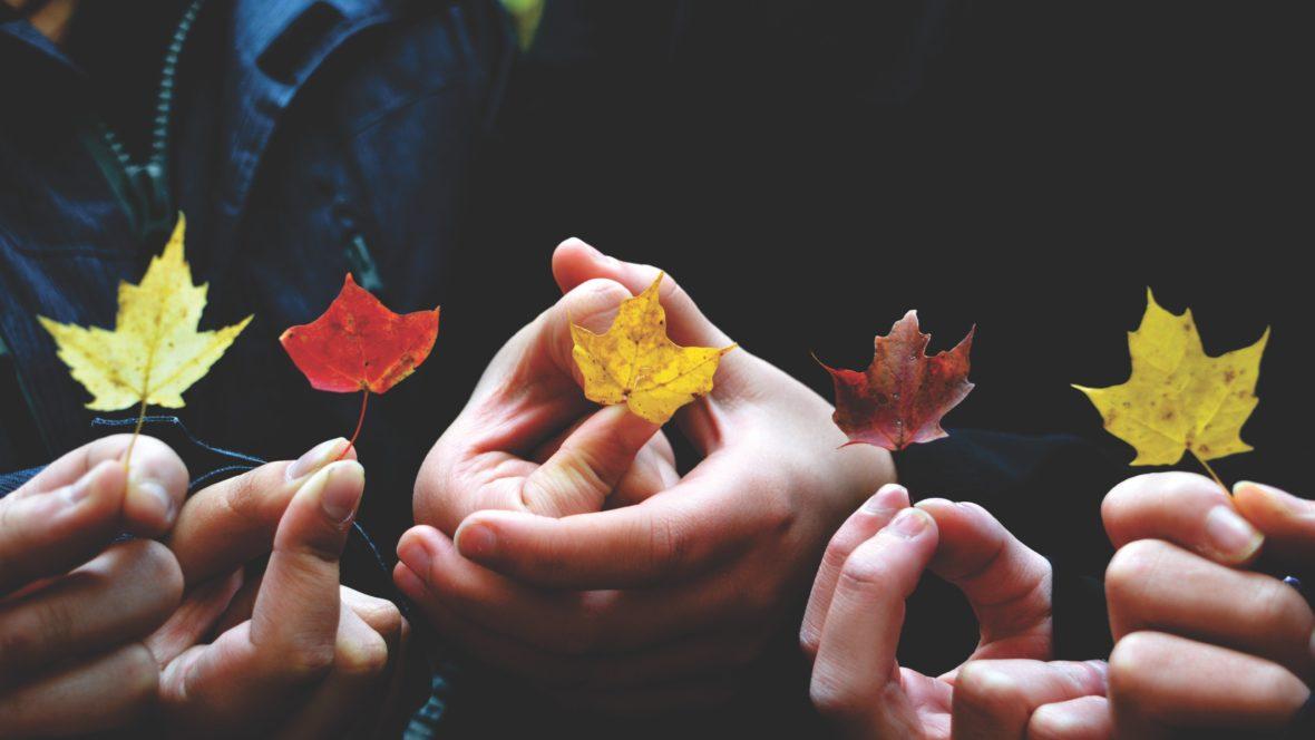 Bringe den Herbst zu dir nach Hause.