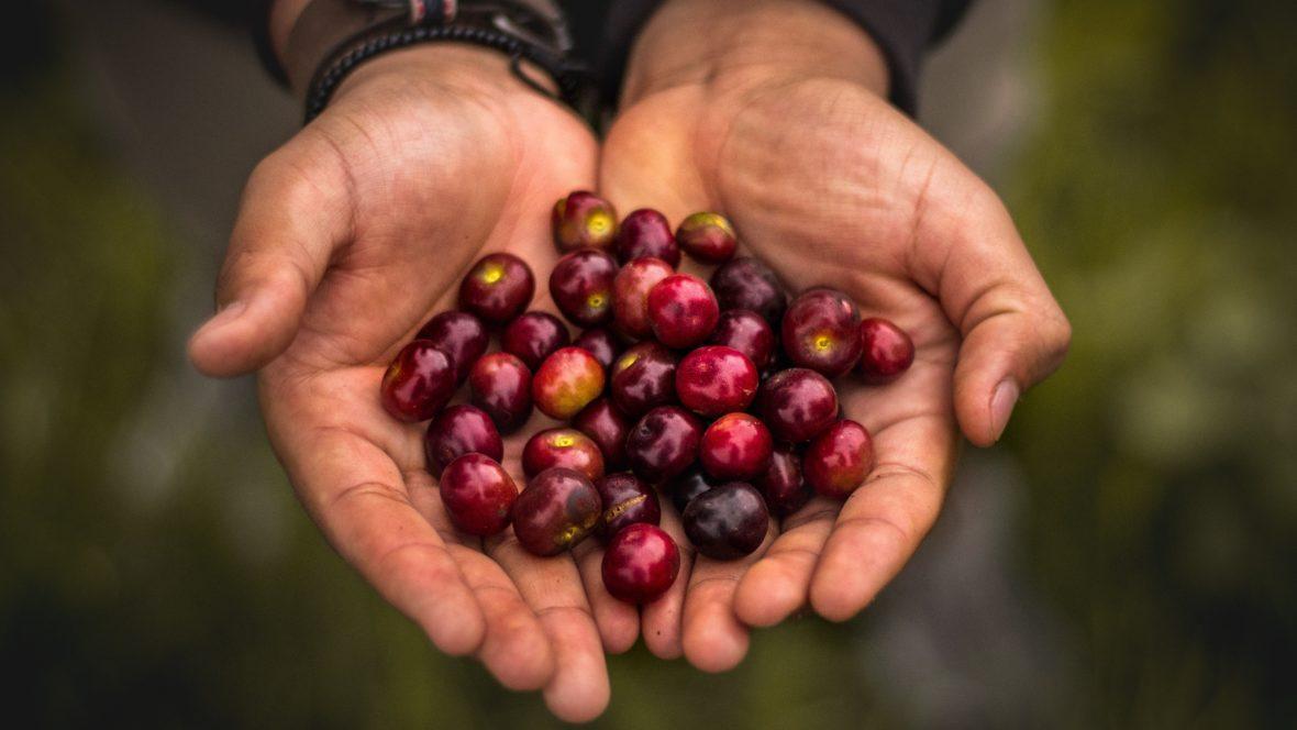 Camu Camu - die neue Superfruit?
