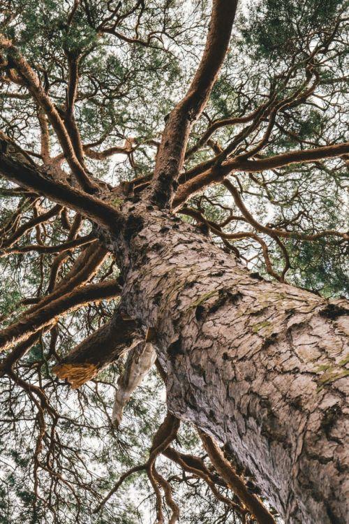 Test z lektury Drzewo do samego nieba
