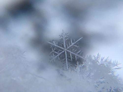 Test z lektury Królowa śniegu