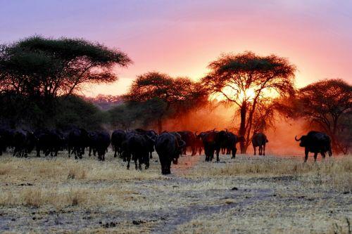 Test z lektury Afryka Kazika