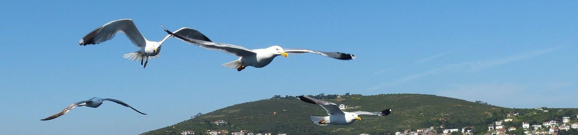 Morze Marmara