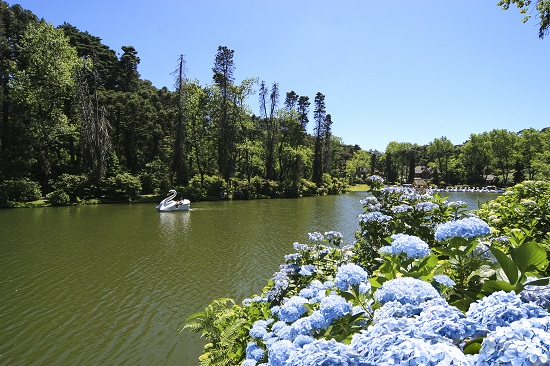 Gramado Lago Negro com Hortênsias