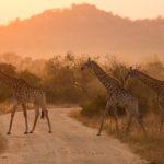 destinos mas economicos 2017 nelspruit sudafrica