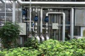Kwekerij levert 470 woning warmte