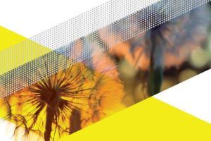 Stimulering Duurzame Energieproductie: consultatie basisbedragen 2017