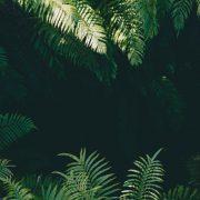 Automobile und Austattung - Lost in the Jungle