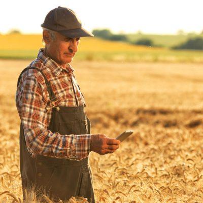 Ein Landwirt misst den Bewässerungszustand seines Feldes via Smartphone