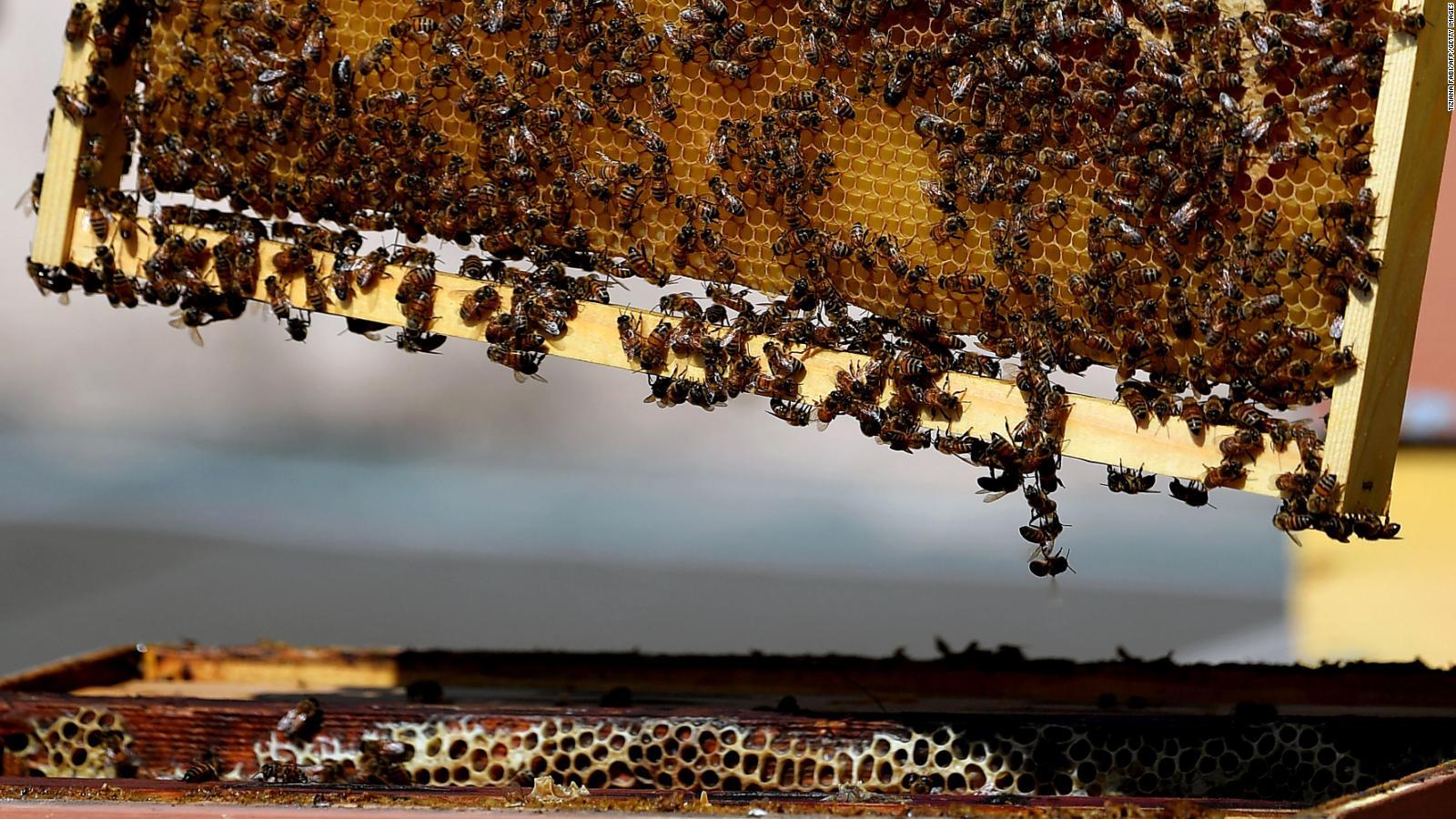 Ein Bienenvolk im Stock