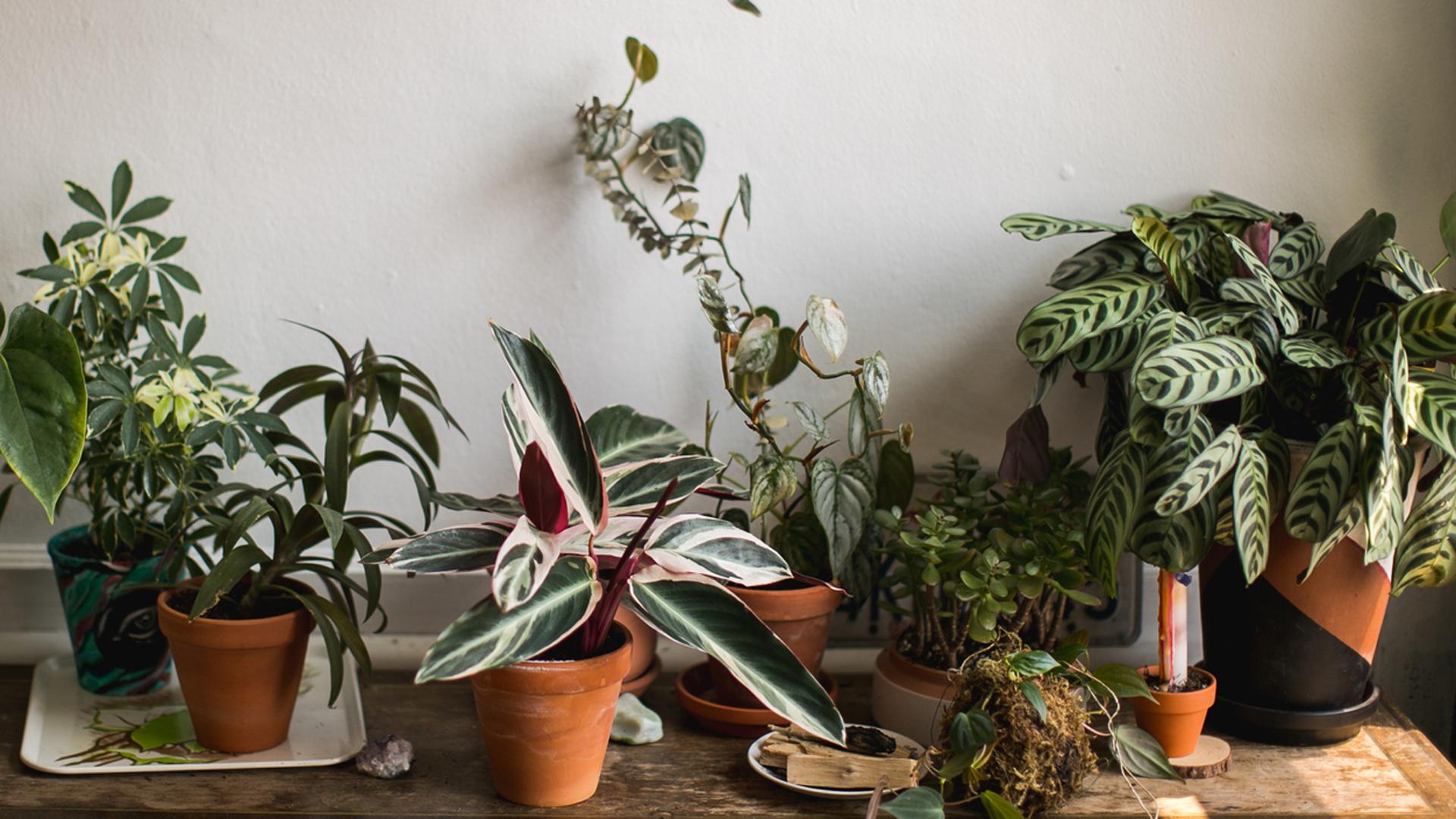 Zimmerpflanzen auf Tisch in Urban Gardening