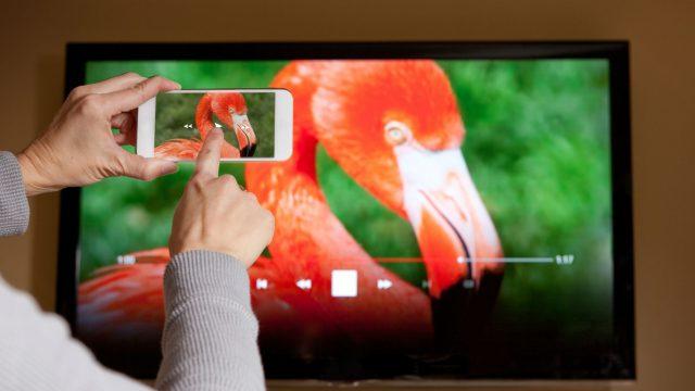 Foto von Flamingo wird vom Smartphone auf den Fernseher gestreamt.