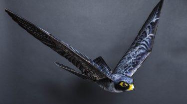 Roboter aus dem Tierreich: Animalische Technik im Einsatz für Mensch und Natur