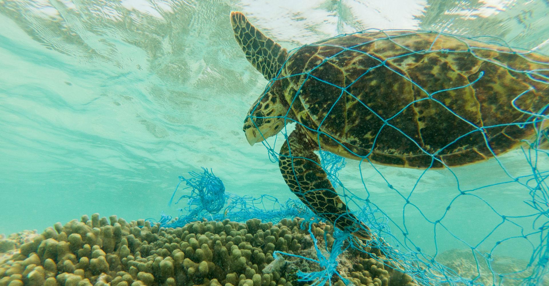 Schildkröte bleibt in Plastik hängen