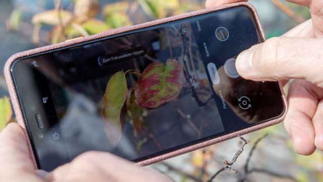 Mit dem Google Pixel 3 XL ein Foto aufnehmen.