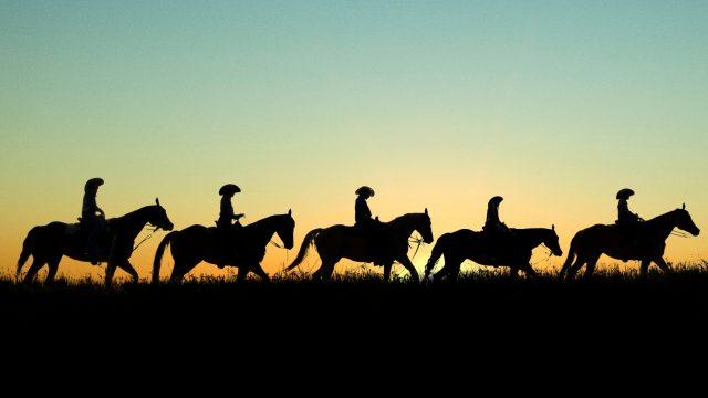 pferd striegeln rdr2